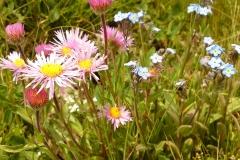 Bloemen en vlinderimpressies (61)