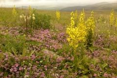 Bloemen en vlinderimpressies (63)