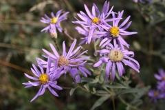 Bloemen en vlinderimpressies (66)