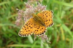 Bloemen en vlinderimpressies (7)