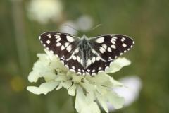Bloemen en vlinderimpressies (70)