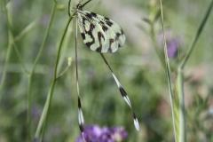 Bloemen en vlinderimpressies (71)