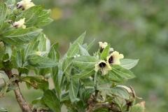 Bloemen en vlinderimpressies (76)