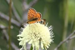 Bloemen en vlinderimpressies (78)
