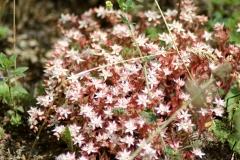 Bloemen en vlinderimpressies (82)