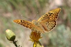 Bloemen en vlinderimpressies (89)