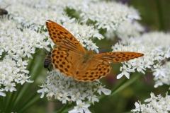Bloemen en vlinderimpressies (90)