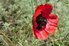 Bloemen en vlinderimpressies (91)