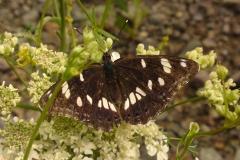 Bloemen en vlinderimpressies (92)