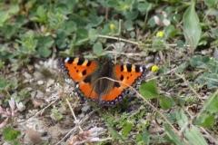 Bloemen en vlinderimpressies (93)