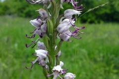Bloemen en vlinderimpressies (95)