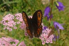 Bloemen en vlinderimpressies (96)