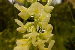 Bloemen en vlinderimpressies (97)