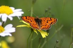 Bloemen en vlinderimpressies (99)