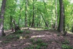 Bossen in het zuiden