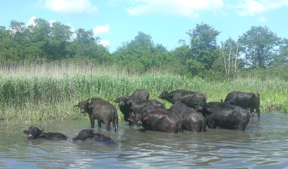 Nationaal Park bij Poti